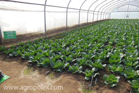Агроволокно или пленка: что лучше купить и использовать в теплице.