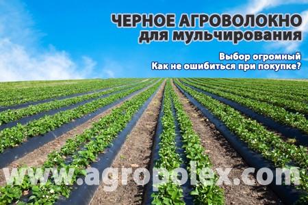Черное агроволокно от сорняков Какое купить?  Как правильно выбрать и не ошибиться? Черное агроволокно отзывы и применение