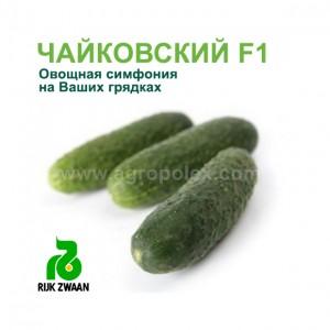 Огурец Чайковский F1