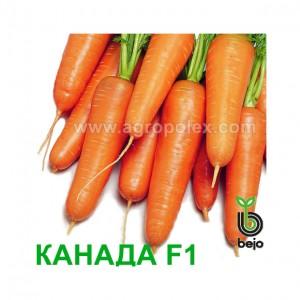 Морковь Канада F1 Bejo