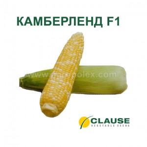 Кукуруза Камберленд f1