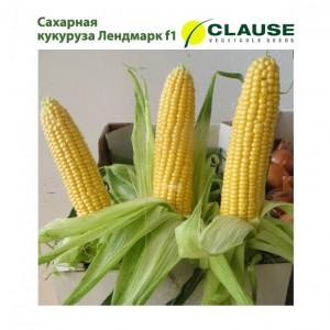 Кукуруза Лендмарк f1 Clause