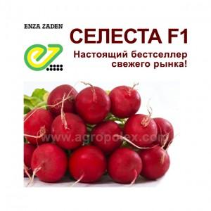 Селеста f1 редис