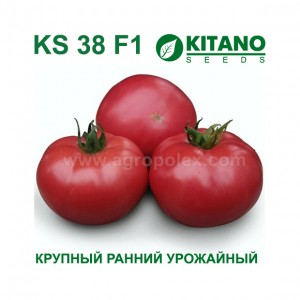 Томат КС 38 F1