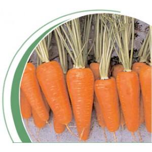 Морковь тип Шантанэ Ред Коред (Red Cored) Вилморин