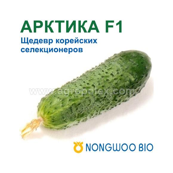 циркон для растений применение для рассады огурцов
