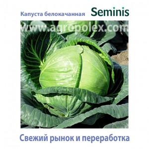 Капуста среднеспелая Seminis
