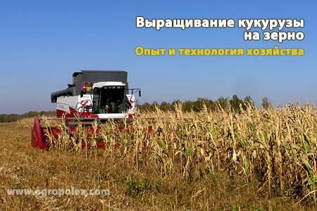 Кукуруза на зерно Технология выращивания Удобрения и подкормка кукурузы