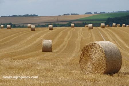 Биодеструктор стерни увеличивает Ваш урожай Биодеструктор применение на кукурузе, пшенице и ячмене, горохе и гречке