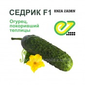 Огурец Седрик f1 Enza-Zaden