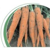Морковь Флакки Никерсон Цваан