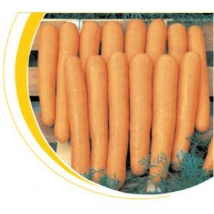 Морковь тип Нантский Маэстро F1 Вилморин
