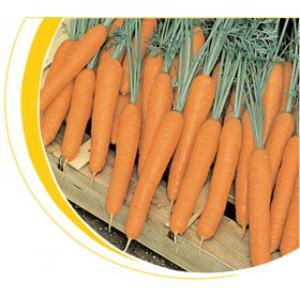 Морковь тип Нантский Престо F1 (Presto F1) Вилморин