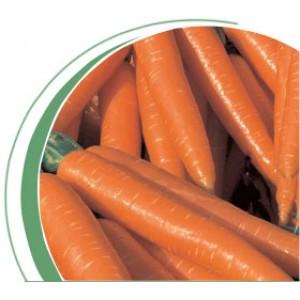 Морковь тип Нантский Волкано F1 (Volcano F1) Вилморин