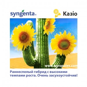 Подсолнечник НК Казио Syngenta