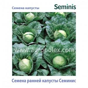 Капуста ранняя Семинис