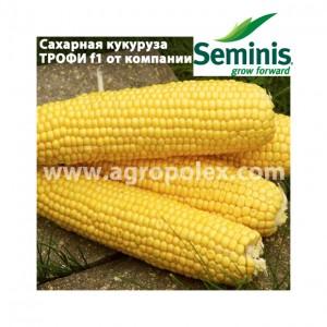 Кукуруза Трофи f1 Семинис