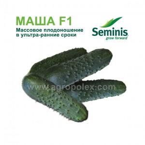 Огурец Маша f1 Seminis