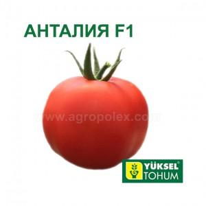 Томат Анталия F1